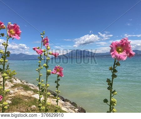 Pink Mallows In The Mountains Across Lake's Water, Mountains, Clouds, Sky. Travel Concept. Copy Spac