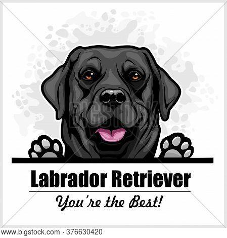 Black Labrador - Vector Peeking Dog Head, Dog Breed