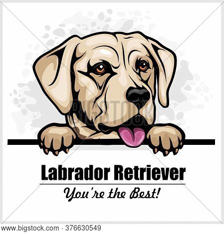 White Labrador - Vector Peeking Dog Head, Dog Breed