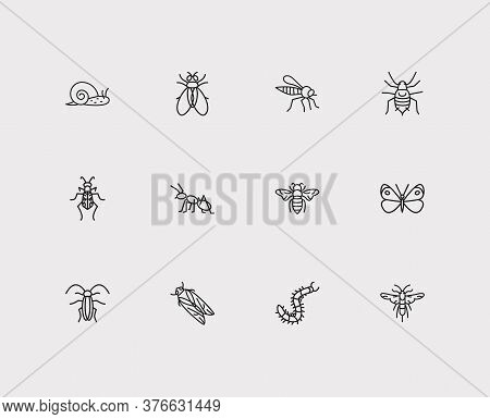 Bug Icons Set. Cabbage Butterfly And Bug Icons With Ant, Bumblebee And Tiger Beetle. Set Of Farm For