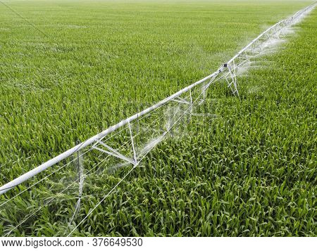 Irrigation System On A Field With Corn. Growing Corn In Fields With An Irrigation System.