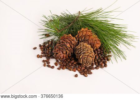 Unpeeled Pine Nut And Pine Cone On White Background. Horizontal Frame Copy Space.