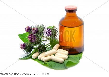 Medicinal Plant Burdock Arctium Lappa. Bottle With Tincture Of Burdock Root And Capsules With Crushe