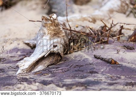 Snag In The Form Of Fantastic Beast On The Seashore In The Sand
