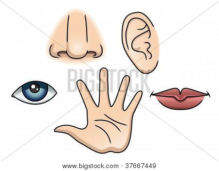poster of An Illustration depicting the five senses: Smell, Taste, Touch, Hearing and Sight.