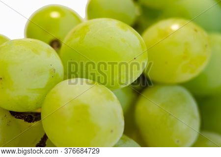 Bunch Of Green Seedless Grape Solated On White Background.
