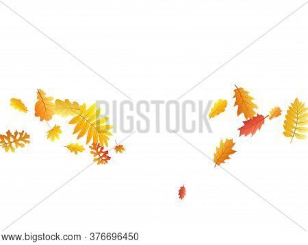 Oak, Maple, Wild Ash Rowan Leaves Vector, Autumn Foliage On White Background. Red Gold Yellow Rowan
