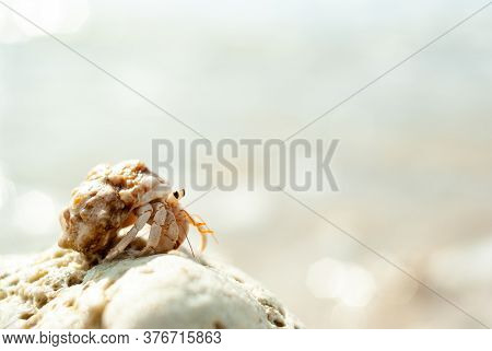 A small and cute natural hermit crab on a coral found in the ocean of Okinawa