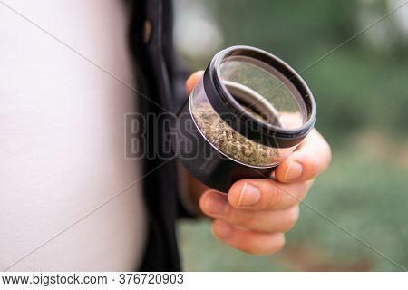 Marijuana Weed Bud And Grinder. Indica Medical Health. Grinder For Weed In Hand.