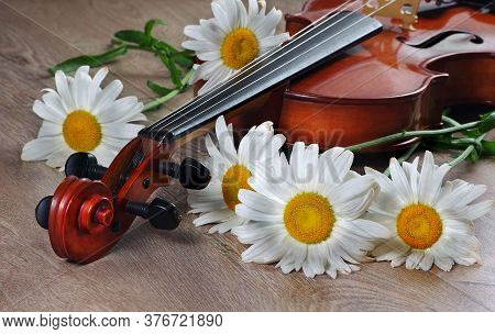 White Daisies And A Violin On A Wooden Table. Flowers And Violin. Bouquet Of Daisies And Vintage Vio