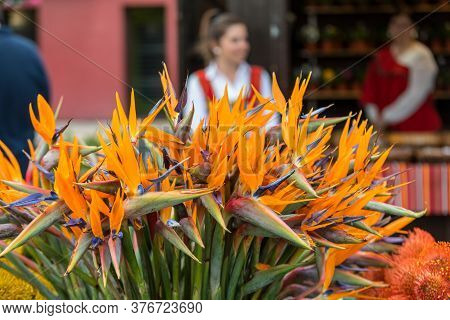 Funchal, Madeira, Portugal - April19, 2018: Tropical Flower Strelitzia Or Bird Of Paradise On Madeir