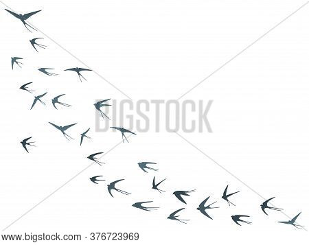 Flying Swallow Birds Silhouettes Vector Illustration. Migratory Martlets Bevy Isolated On White. Win
