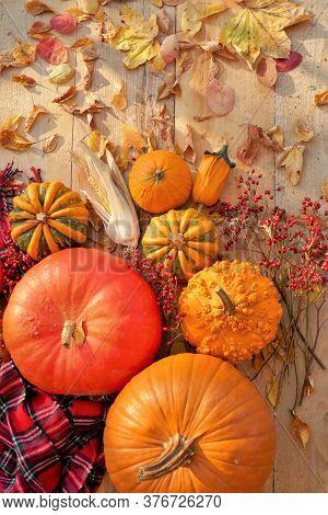 Thanksgiving Day. Halloween.autumn Season. Pumpkins Assortment Set, Red Checkered Scarf, Corn And Au