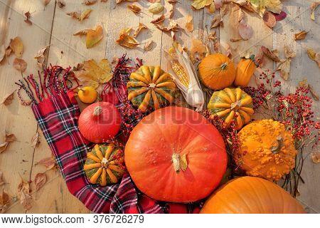 Thanksgiving Day. Halloween. Harvest Of Pumpkins.autumn Season. Pumpkins Assortment Set, Red Checker