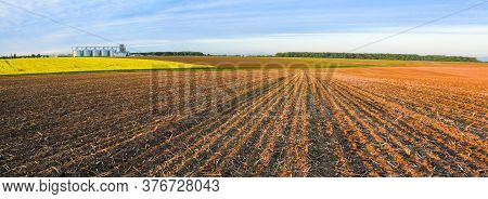 Agricultural Fields And Granaries On The Horizon. Panoramic Image. Rapeseed Blooms. Young Shoots Of