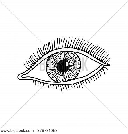 Human Eye, Outline, Anatomical, Hand Drawn Illustration On White Background. Vector Stock.