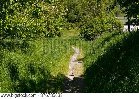 Fairytale Forest Landscape Alley Way Outdoor Space Park Nature Landscape Environment With Path For W