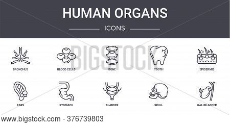 Human Organs Concept Line Icons Set. Contains Icons Usable For Web, Logo, Ui Ux Such As Blood Cells,
