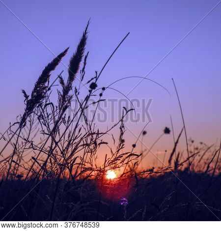 Blades Of Grass In The Rays Of The Setting Sun