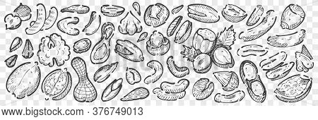 Hand Drawn Nuts Doodle Set. Collection Pencil Chalk Drawing Sketches Of Almond Cashews Macadamia Pea