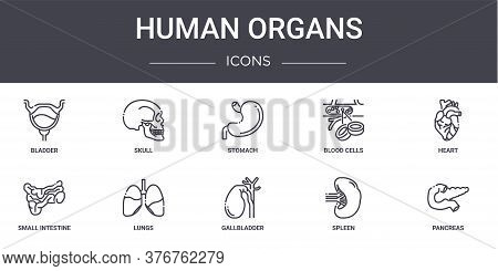 Human Organs Concept Line Icons Set. Contains Icons Usable For Web, Logo, Ui Ux Such As Skull, Blood