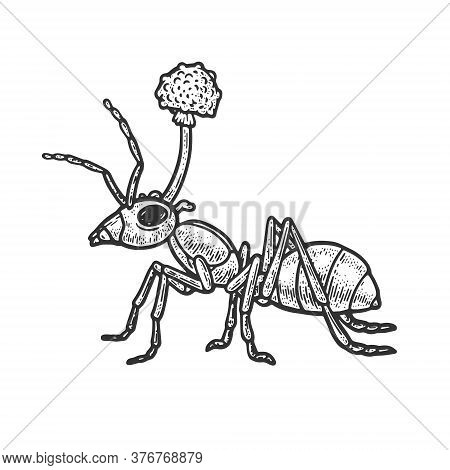 Zombie Ant Mushroom Sketch Engraving Vector Illustration. T-shirt Apparel Print Design. Scratch Boar