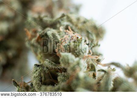 Marijuana Nature Bud. The Pot Leaves On Buds Thc Cbd. Indica Sativa Medical Health. Grinder And Cann