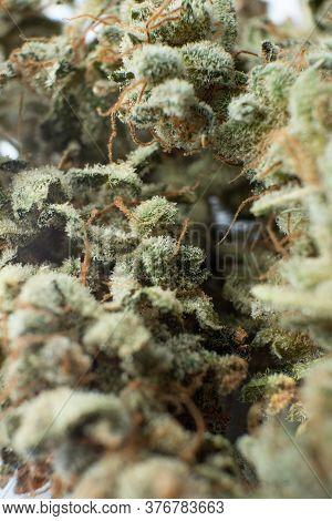 Cannabis Weed Bud Macro. The Pot Leaves On Buds Cbd. Thc Kief In Grinder. Marijuana Nature Bud Close