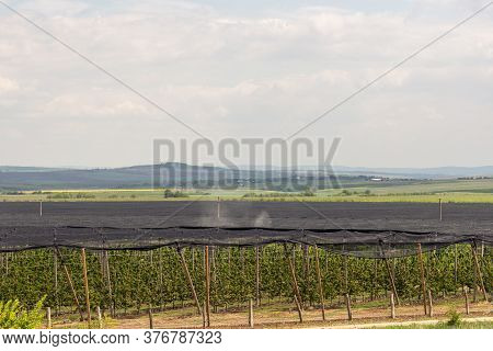 Rural Agricultural Scenery With Tractor Apllying Something In Apple Garden At Spring Time