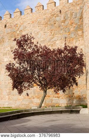 Tree in the ancient fortification of Avila, Castile and Leon, Spain