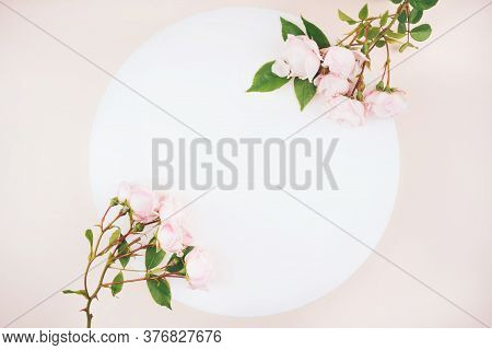 Pastel Pink Colored Roses Buds And Green Leaves Composition On White And Creamy Background. Flat Lay