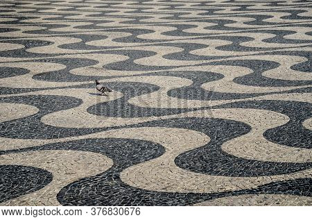 Typical Portuguese Cobblestone Hand-made Mosaic Pavement And A Pigeon, In Rossio Square (or Pedro Iv