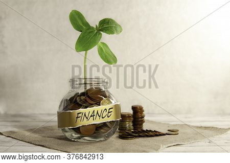 Finance. Glass Jar With Coins And A Plant On The Table And Several Coins Nearby, On A Gray Backgroun