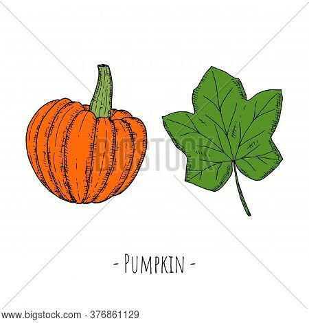 Whole Pumpkin And Pumpkin Leaf. Vector Cartoon Illustrations.