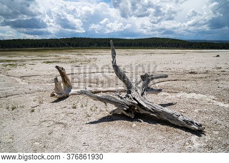 Large Logs Of Petrified Wood In The Geothermal Geyser Area Of The Fountain Paint Pots In Yellowstone