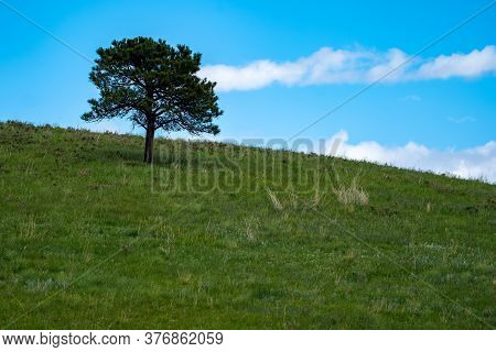 Minimalist Landscape Photo Of A Lone Tree On A Hill In Custer State Park With Blue Sky Clouds