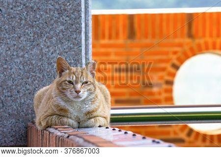 Cuty Chubby Orange Domestic Cat Lies On The Brick Wall.