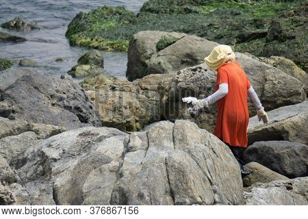 Korean Woman Searchs For Sea Shell And Clam For Food On The Rock Beach.