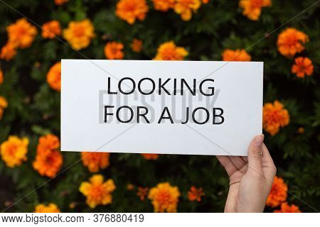 White Paper Poster In Hand On Flowerbed. Blank Template Sheet With Inscription Looking For A Job In