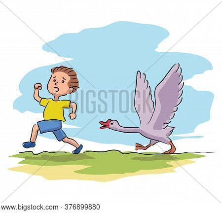 Scared Little Boy Running Away From Goose On Village Farmyard. Frightened Kid And Domesticated Bird.