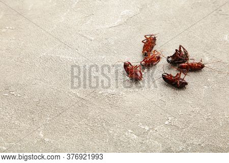Dead Cockroaches On Grey Background. Concept The Problem In The House Because Of Cockroaches Living