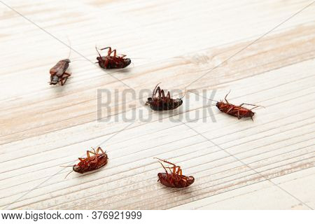 Dead Cockroaches On Light Background. Concept The Problem In The House Because Of Cockroaches Living
