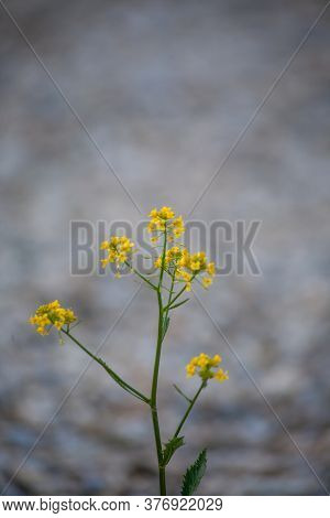 A Closeup Shot Of A Beautiful Tansy Under The Sunlight