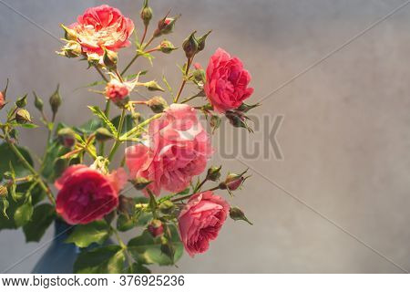 Red Rose With Strong Contrast And Water Drops On A Gray Background. Bouquet Of Flowers In A Vase