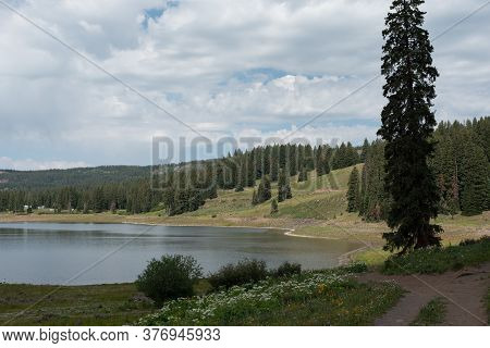 Ward Reservoir On Western Colorado's Grand Mesa. Sunny Day With Scattered Clouds In Mid-july. Foregr