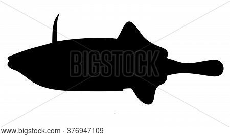 Triggerfish. Black Hand Drawn Realistic Silhouette Vector Image.