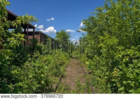 Railway Track In The Bushes