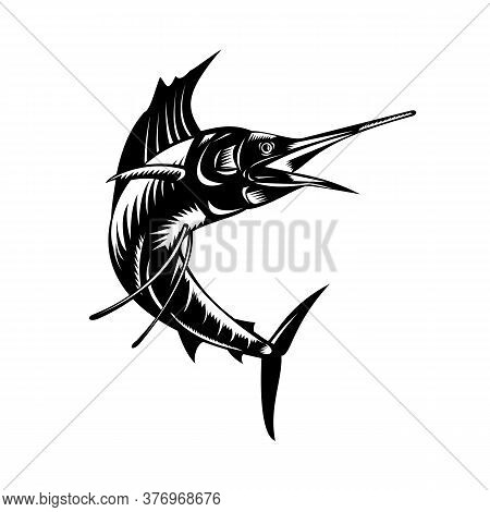 Retro Woodcut Style Illustration Of An Atlantic Sailfish Or Istiophorus Albicans, A Billfish Living