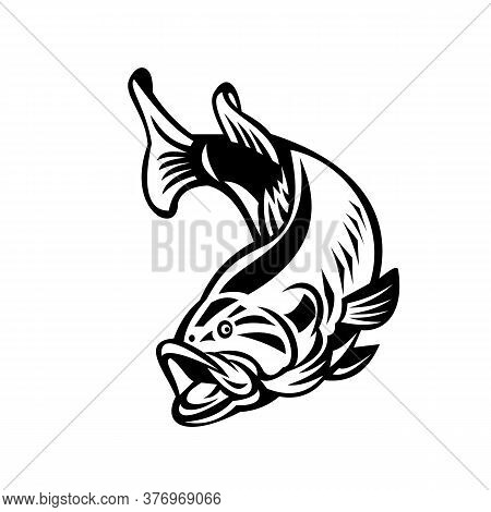 Illustration Of A Largemouth Bass (micropterus Salmoides), Species Of Black Bass And A Carnivorous F