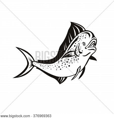 Retro Style Illustration Of A Mahi-mahi, Dorado Or Common Dolphinfish (coryphaena Hippurus), A Surfa